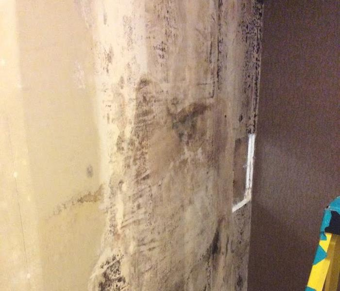 Mold Remediation Mold Remediation and Restoration in Grants Pass